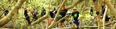 กองคลังร่วมปลูกป่าชายเลน